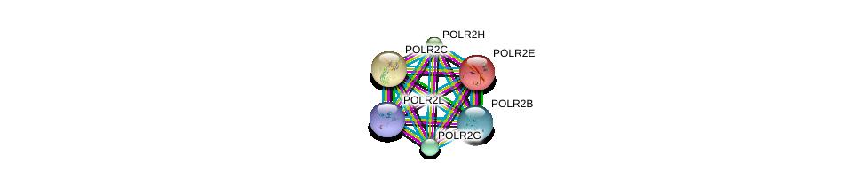 http://string-db.org/version_10/api/image/networkList?limit=0&targetmode=proteins&caller_identity=gene_cards&network_flavor=evidence&identifiers=9606.ENSP00000324124%0d%0a9606.ENSP00000219252%0d%0a9606.ENSP00000215587%0d%0a9606.ENSP00000301788%0d%0a9606.ENSP00000312735%0d%0a9606.ENSP00000296223%0d%0a