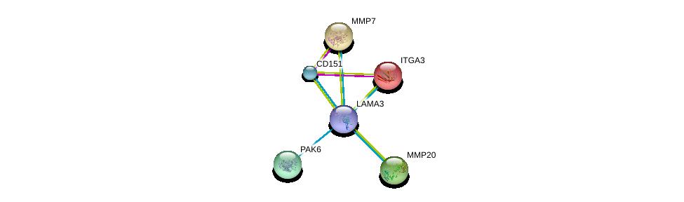 http://string-db.org/version_10/api/image/networkList?limit=0&targetmode=proteins&caller_identity=gene_cards&network_flavor=evidence&identifiers=9606.ENSP00000324532%0d%0a9606.ENSP00000324101%0d%0a9606.ENSP00000007722%0d%0a9606.ENSP00000260227%0d%0a9606.ENSP00000260228%0d%0a9606.ENSP00000260404%0d%0a