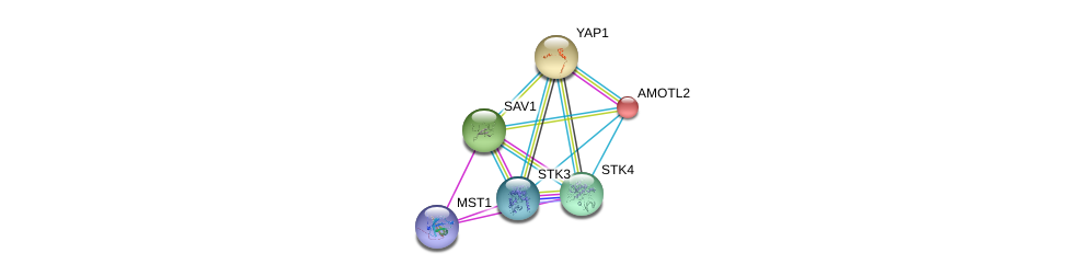 http://string-db.org/version_10/api/image/networkList?limit=0&targetmode=proteins&caller_identity=gene_cards&network_flavor=evidence&identifiers=9606.ENSP00000324729%0d%0a9606.ENSP00000390500%0d%0a9606.ENSP00000414287%0d%0a9606.ENSP00000361892%0d%0a9606.ENSP00000282441%0d%0a9606.ENSP00000249883%0d%0a