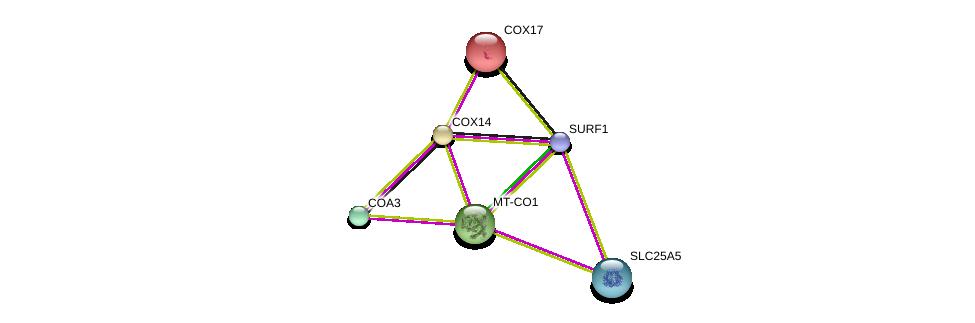 http://string-db.org/version_10/api/image/networkList?limit=0&targetmode=proteins&caller_identity=gene_cards&network_flavor=evidence&identifiers=9606.ENSP00000326052%0d%0a9606.ENSP00000354499%0d%0a9606.ENSP00000261070%0d%0a9606.ENSP00000361042%0d%0a9606.ENSP00000360671%0d%0a9606.ENSP00000354762%0d%0a
