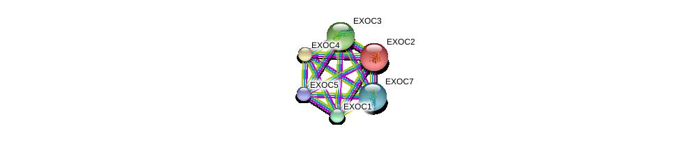 http://string-db.org/version_10/api/image/networkList?limit=0&targetmode=proteins&caller_identity=gene_cards&network_flavor=evidence&identifiers=9606.ENSP00000326514%0d%0a9606.ENSP00000253861%0d%0a9606.ENSP00000230449%0d%0a9606.ENSP00000334100%0d%0a9606.ENSP00000323377%0d%0a9606.ENSP00000389934%0d%0a