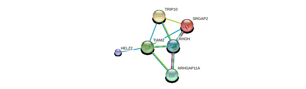 http://string-db.org/version_10/api/image/networkList?limit=0&targetmode=proteins&caller_identity=gene_cards&network_flavor=evidence&identifiers=9606.ENSP00000327315%0d%0a9606.ENSP00000355090%0d%0a9606.ENSP00000371219%0d%0a9606.ENSP00000295713%0d%0a9606.ENSP00000320493%0d%0a9606.ENSP00000417401%0d%0a