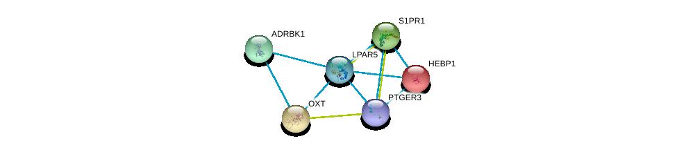 http://string-db.org/version_10/api/image/networkList?limit=0&targetmode=proteins&caller_identity=gene_cards&network_flavor=evidence&identifiers=9606.ENSP00000327875%0d%0a9606.ENSP00000305416%0d%0a9606.ENSP00000217386%0d%0a9606.ENSP00000349003%0d%0a9606.ENSP00000014930%0d%0a9606.ENSP00000312262%0d%0a
