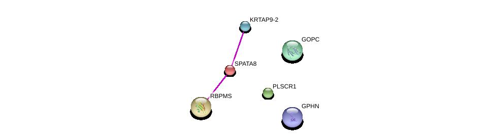 http://string-db.org/version_10/api/image/networkList?limit=0&targetmode=proteins&caller_identity=gene_cards&network_flavor=evidence&identifiers=9606.ENSP00000328149%0d%0a9606.ENSP00000340176%0d%0a9606.ENSP00000366950%0d%0a9606.ENSP00000345494%0d%0a9606.ENSP00000357484%0d%0a9606.ENSP00000417901%0d%0a