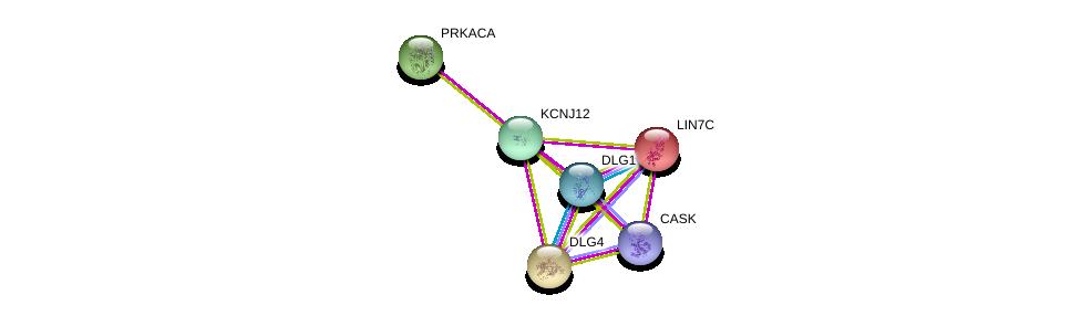 http://string-db.org/version_10/api/image/networkList?limit=0&targetmode=proteins&caller_identity=gene_cards&network_flavor=evidence&identifiers=9606.ENSP00000328150%0d%0a9606.ENSP00000345731%0d%0a9606.ENSP00000309591%0d%0a9606.ENSP00000367408%0d%0a9606.ENSP00000293813%0d%0a9606.ENSP00000278193%0d%0a