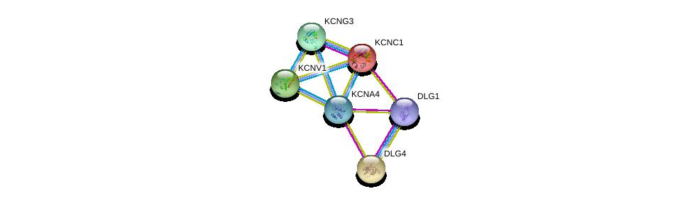 http://string-db.org/version_10/api/image/networkList?limit=0&targetmode=proteins&caller_identity=gene_cards&network_flavor=evidence&identifiers=9606.ENSP00000328511%0d%0a9606.ENSP00000293813%0d%0a9606.ENSP00000345731%0d%0a9606.ENSP00000265969%0d%0a9606.ENSP00000297404%0d%0a9606.ENSP00000304127%0d%0a