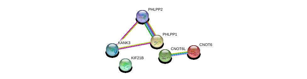 http://string-db.org/version_10/api/image/networkList?limit=0&targetmode=proteins&caller_identity=gene_cards&network_flavor=evidence&identifiers=9606.ENSP00000328923%0d%0a9606.ENSP00000262719%0d%0a9606.ENSP00000348611%0d%0a9606.ENSP00000261951%0d%0a9606.ENSP00000264903%0d%0a9606.ENSP00000328494%0d%0a