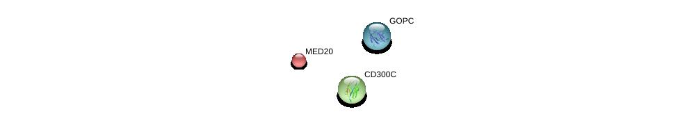 http://string-db.org/version_10/api/image/networkList?limit=0&targetmode=proteins&caller_identity=gene_cards&network_flavor=evidence&identifiers=9606.ENSP00000329507%0d%0a9606.ENSP00000357484%0d%0a9606.ENSP00000265350%0d%0a
