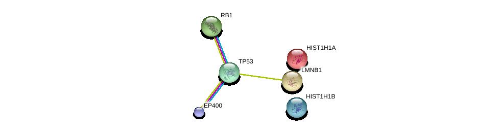 http://string-db.org/version_10/api/image/networkList?limit=0&targetmode=proteins&caller_identity=gene_cards&network_flavor=evidence&identifiers=9606.ENSP00000330074%0d%0a9606.ENSP00000269305%0d%0a9606.ENSP00000374212%0d%0a9606.ENSP00000244573%0d%0a9606.ENSP00000261366%0d%0a9606.ENSP00000267163%0d%0a