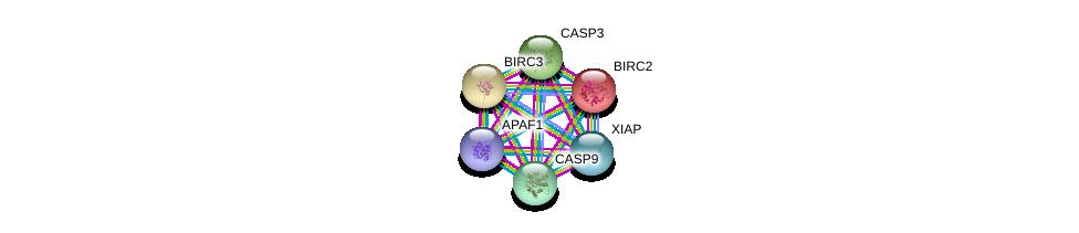 http://string-db.org/version_10/api/image/networkList?limit=0&targetmode=proteins&caller_identity=gene_cards&network_flavor=evidence&identifiers=9606.ENSP00000330237%0d%0a9606.ENSP00000448165%0d%0a9606.ENSP00000347858%0d%0a9606.ENSP00000227758%0d%0a9606.ENSP00000311032%0d%0a9606.ENSP00000263464%0d%0a