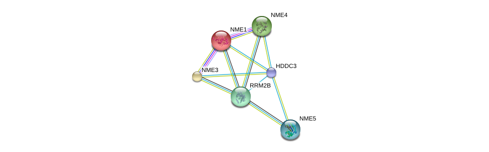 http://string-db.org/version_10/api/image/networkList?limit=0&targetmode=proteins&caller_identity=gene_cards&network_flavor=evidence&identifiers=9606.ENSP00000330721%0d%0a9606.ENSP00000013034%0d%0a9606.ENSP00000219302%0d%0a9606.ENSP00000219479%0d%0a9606.ENSP00000251810%0d%0a9606.ENSP00000265191%0d%0a