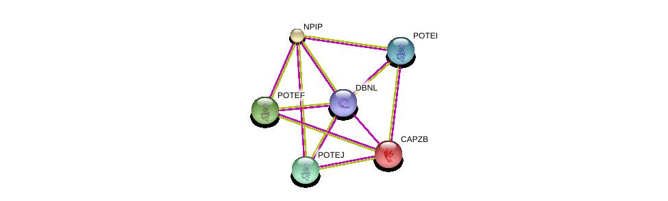 http://string-db.org/version_10/api/image/networkList?limit=0&targetmode=proteins&caller_identity=gene_cards&network_flavor=evidence&identifiers=9606.ENSP00000331843%0d%0a9606.ENSP00000264202%0d%0a9606.ENSP00000417653%0d%0a9606.ENSP00000350052%0d%0a9606.ENSP00000387176%0d%0a9606.ENSP00000392718%0d%0a