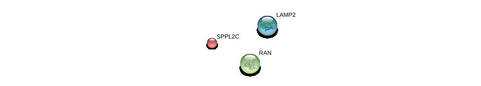 http://string-db.org/version_10/api/image/networkList?limit=0&targetmode=proteins&caller_identity=gene_cards&network_flavor=evidence&identifiers=9606.ENSP00000332488%0d%0a9606.ENSP00000408411%0d%0a9606.ENSP00000376176%0d%0a