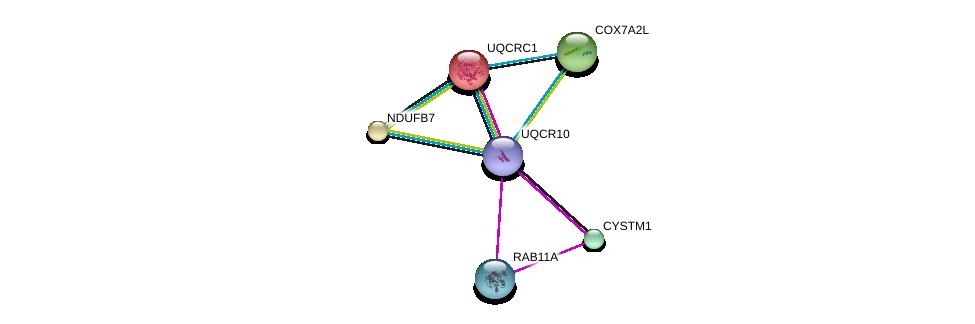 http://string-db.org/version_10/api/image/networkList?limit=0&targetmode=proteins&caller_identity=gene_cards&network_flavor=evidence&identifiers=9606.ENSP00000332887%0d%0a9606.ENSP00000203407%0d%0a9606.ENSP00000261811%0d%0a9606.ENSP00000261890%0d%0a9606.ENSP00000234301%0d%0a9606.ENSP00000215565%0d%0a