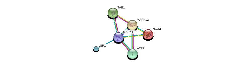 http://string-db.org/version_10/api/image/networkList?limit=0&targetmode=proteins&caller_identity=gene_cards&network_flavor=evidence&identifiers=9606.ENSP00000333685%0d%0a9606.ENSP00000264110%0d%0a9606.ENSP00000216160%0d%0a9606.ENSP00000308383%0d%0a9606.ENSP00000159060%0d%0a9606.ENSP00000215659%0d%0a