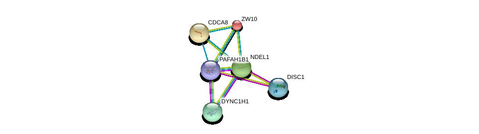 http://string-db.org/version_10/api/image/networkList?limit=0&targetmode=proteins&caller_identity=gene_cards&network_flavor=evidence&identifiers=9606.ENSP00000333982%0d%0a9606.ENSP00000380378%0d%0a9606.ENSP00000355593%0d%0a9606.ENSP00000348965%0d%0a9606.ENSP00000316121%0d%0a9606.ENSP00000200135%0d%0a