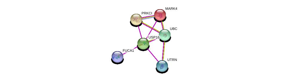 http://string-db.org/version_10/api/image/networkList?limit=0&targetmode=proteins&caller_identity=gene_cards&network_flavor=evidence&identifiers=9606.ENSP00000334808%0d%0a9606.ENSP00000344818%0d%0a9606.ENSP00000356515%0d%0a9606.ENSP00000295797%0d%0a9606.ENSP00000363603%0d%0a9606.ENSP00000262891%0d%0a