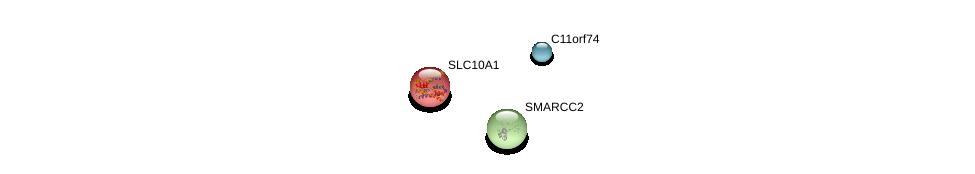 http://string-db.org/version_10/api/image/networkList?limit=0&targetmode=proteins&caller_identity=gene_cards&network_flavor=evidence&identifiers=9606.ENSP00000334848%0d%0a9606.ENSP00000216540%0d%0a9606.ENSP00000267064%0d%0a