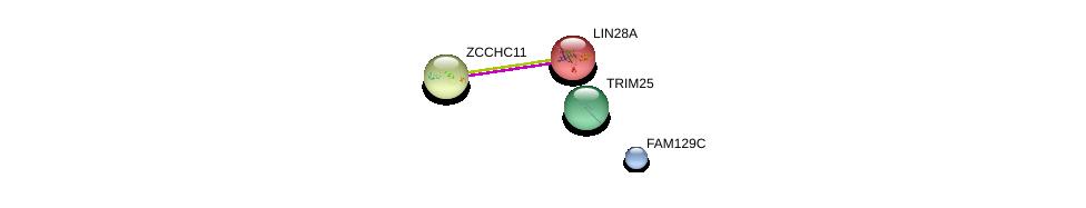 http://string-db.org/version_10/api/image/networkList?limit=0&targetmode=proteins&caller_identity=gene_cards&network_flavor=evidence&identifiers=9606.ENSP00000335040%0d%0a9606.ENSP00000254231%0d%0a9606.ENSP00000257177%0d%0a9606.ENSP00000323889%0d%0a