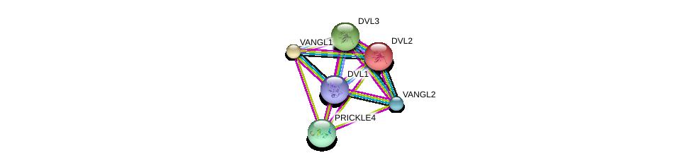 http://string-db.org/version_10/api/image/networkList?limit=0&targetmode=proteins&caller_identity=gene_cards&network_flavor=evidence&identifiers=9606.ENSP00000335185%0d%0a9606.ENSP00000310800%0d%0a9606.ENSP00000357040%0d%0a9606.ENSP00000005340%0d%0a9606.ENSP00000316054%0d%0a9606.ENSP00000368169%0d%0a