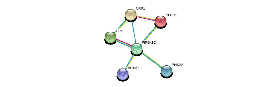 http://string-db.org/version_10/api/image/networkList?limit=0&targetmode=proteins&caller_identity=gene_cards&network_flavor=evidence&identifiers=9606.ENSP00000335333%0d%0a9606.ENSP00000316029%0d%0a9606.ENSP00000244007%0d%0a9606.ENSP00000265371%0d%0a9606.ENSP00000388996%0d%0a9606.ENSP00000359665%0d%0a