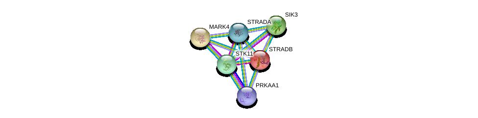 http://string-db.org/version_10/api/image/networkList?limit=0&targetmode=proteins&caller_identity=gene_cards&network_flavor=evidence&identifiers=9606.ENSP00000336655%0d%0a9606.ENSP00000324856%0d%0a9606.ENSP00000292055%0d%0a9606.ENSP00000346148%0d%0a9606.ENSP00000262891%0d%0a9606.ENSP00000194530%0d%0a