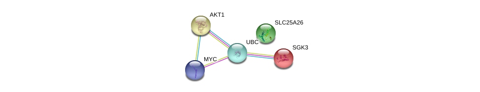 http://string-db.org/version_10/api/image/networkList?limit=0&targetmode=proteins&caller_identity=gene_cards&network_flavor=evidence&identifiers=9606.ENSP00000336801%0d%0a9606.ENSP00000344818%0d%0a9606.ENSP00000367207%0d%0a9606.ENSP00000270202%0d%0a9606.ENSP00000262211%0d%0a