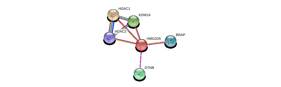http://string-db.org/version_10/api/image/networkList?limit=0&targetmode=proteins&caller_identity=gene_cards&network_flavor=evidence&identifiers=9606.ENSP00000336856%0d%0a9606.ENSP00000430432%0d%0a9606.ENSP00000362649%0d%0a9606.ENSP00000384084%0d%0a9606.ENSP00000383042%0d%0a9606.ENSP00000403524%0d%0a