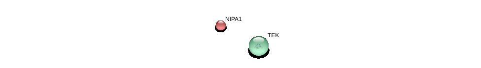 http://string-db.org/version_10/api/image/networkList?limit=0&targetmode=proteins&caller_identity=gene_cards&network_flavor=evidence&identifiers=9606.ENSP00000337452%0d%0a9606.ENSP00000369375%0d%0a