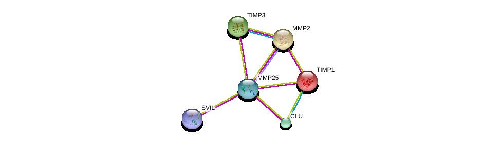 http://string-db.org/version_10/api/image/networkList?limit=0&targetmode=proteins&caller_identity=gene_cards&network_flavor=evidence&identifiers=9606.ENSP00000337816%0d%0a9606.ENSP00000219070%0d%0a9606.ENSP00000315130%0d%0a9606.ENSP00000348128%0d%0a9606.ENSP00000266085%0d%0a9606.ENSP00000218388%0d%0a