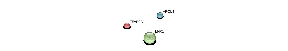 http://string-db.org/version_10/api/image/networkList?limit=0&targetmode=proteins&caller_identity=gene_cards&network_flavor=evidence&identifiers=9606.ENSP00000338260%0d%0a9606.ENSP00000201031%0d%0a9606.ENSP00000263925%0d%0a