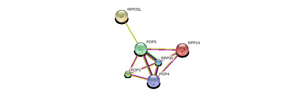 http://string-db.org/version_10/api/image/networkList?limit=0&targetmode=proteins&caller_identity=gene_cards&network_flavor=evidence&identifiers=9606.ENSP00000339529%0d%0a9606.ENSP00000465213%0d%0a9606.ENSP00000295959%0d%0a9606.ENSP00000350098%0d%0a9606.ENSP00000389182%0d%0a9606.ENSP00000297613%0d%0a
