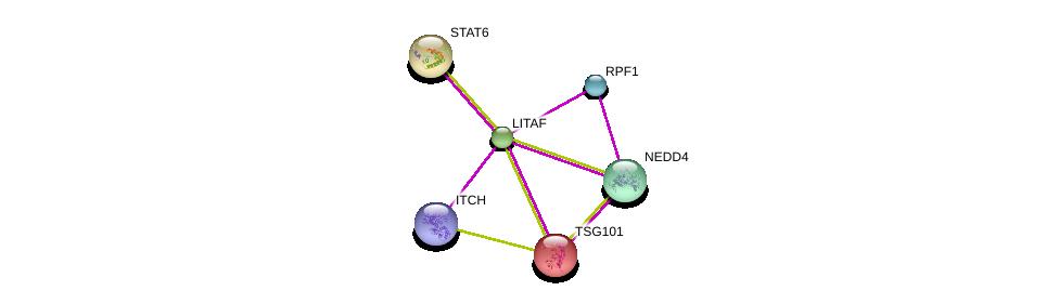 http://string-db.org/version_10/api/image/networkList?limit=0&targetmode=proteins&caller_identity=gene_cards&network_flavor=evidence&identifiers=9606.ENSP00000340118%0d%0a9606.ENSP00000300134%0d%0a9606.ENSP00000345530%0d%0a9606.ENSP00000363998%0d%0a9606.ENSP00000251968%0d%0a9606.ENSP00000359688%0d%0a