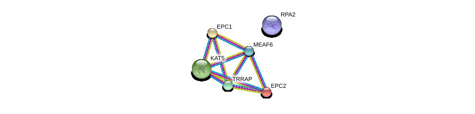 http://string-db.org/version_10/api/image/networkList?limit=0&targetmode=proteins&caller_identity=gene_cards&network_flavor=evidence&identifiers=9606.ENSP00000340330%0d%0a9606.ENSP00000258484%0d%0a9606.ENSP00000263062%0d%0a9606.ENSP00000362166%0d%0a9606.ENSP00000347733%0d%0a9606.ENSP00000363021%0d%0a
