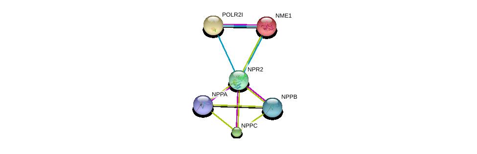 http://string-db.org/version_10/api/image/networkList?limit=0&targetmode=proteins&caller_identity=gene_cards&network_flavor=evidence&identifiers=9606.ENSP00000341083%0d%0a9606.ENSP00000295440%0d%0a9606.ENSP00000365651%0d%0a9606.ENSP00000365663%0d%0a9606.ENSP00000013034%0d%0a9606.ENSP00000221859%0d%0a