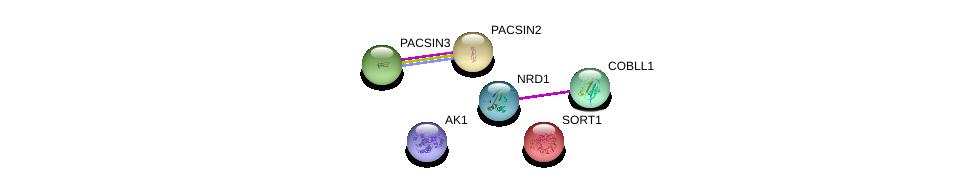 http://string-db.org/version_10/api/image/networkList?limit=0&targetmode=proteins&caller_identity=gene_cards&network_flavor=evidence&identifiers=9606.ENSP00000341360%0d%0a9606.ENSP00000263246%0d%0a9606.ENSP00000298838%0d%0a9606.ENSP00000346890%0d%0a9606.ENSP00000362249%0d%0a9606.ENSP00000256637%0d%0a