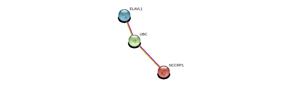http://string-db.org/version_10/api/image/networkList?limit=0&targetmode=proteins&caller_identity=gene_cards&network_flavor=evidence&identifiers=9606.ENSP00000342137%0d%0a9606.ENSP00000385269%0d%0a9606.ENSP00000344818%0d%0a