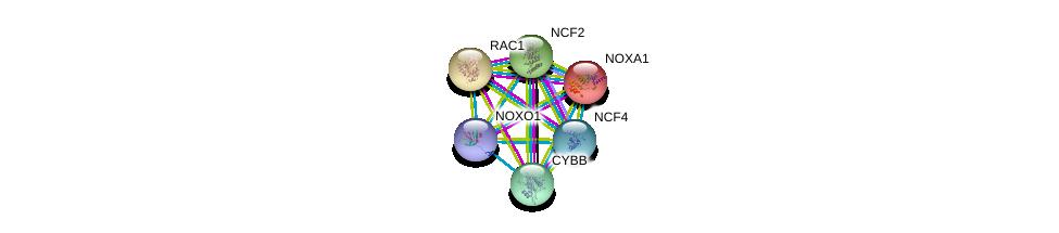 http://string-db.org/version_10/api/image/networkList?limit=0&targetmode=proteins&caller_identity=gene_cards&network_flavor=evidence&identifiers=9606.ENSP00000342848%0d%0a9606.ENSP00000380450%0d%0a9606.ENSP00000348461%0d%0a9606.ENSP00000356505%0d%0a9606.ENSP00000380334%0d%0a9606.ENSP00000367851%0d%0a