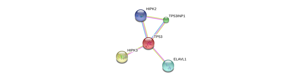 http://string-db.org/version_10/api/image/networkList?limit=0&targetmode=proteins&caller_identity=gene_cards&network_flavor=evidence&identifiers=9606.ENSP00000344215%0d%0a9606.ENSP00000269305%0d%0a9606.ENSP00000385571%0d%0a9606.ENSP00000385269%0d%0a9606.ENSP00000304226%0d%0a