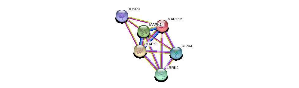 http://string-db.org/version_10/api/image/networkList?limit=0&targetmode=proteins&caller_identity=gene_cards&network_flavor=evidence&identifiers=9606.ENSP00000345853%0d%0a9606.ENSP00000298910%0d%0a9606.ENSP00000332454%0d%0a9606.ENSP00000215659%0d%0a9606.ENSP00000229794%0d%0a9606.ENSP00000215832%0d%0a