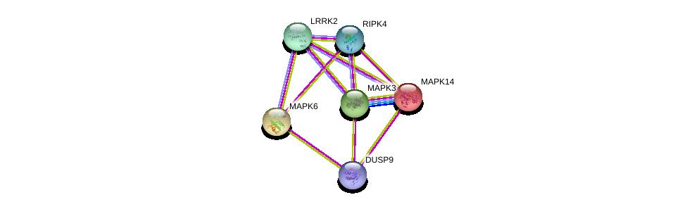 http://string-db.org/version_10/api/image/networkList?limit=0&targetmode=proteins&caller_identity=gene_cards&network_flavor=evidence&identifiers=9606.ENSP00000345853%0d%0a9606.ENSP00000298910%0d%0a9606.ENSP00000332454%0d%0a9606.ENSP00000229794%0d%0a9606.ENSP00000261845%0d%0a9606.ENSP00000263025%0d%0a