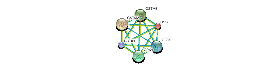 http://string-db.org/version_10/api/image/networkList?limit=0&targetmode=proteins&caller_identity=gene_cards&network_flavor=evidence&identifiers=9606.ENSP00000346103%0d%0a9606.ENSP00000381340%0d%0a9606.ENSP00000216951%0d%0a9606.ENSP00000431049%0d%0a9606.ENSP00000241337%0d%0a9606.ENSP00000256593%0d%0a