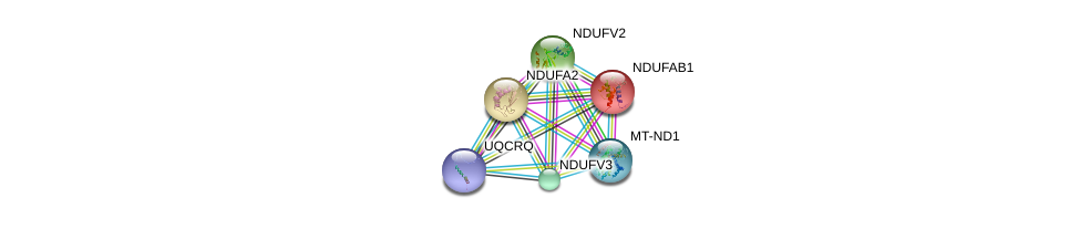 http://string-db.org/version_10/api/image/networkList?limit=0&targetmode=proteins&caller_identity=gene_cards&network_flavor=evidence&identifiers=9606.ENSP00000346196%0d%0a9606.ENSP00000252102%0d%0a9606.ENSP00000007516%0d%0a9606.ENSP00000327268%0d%0a9606.ENSP00000354687%0d%0a9606.ENSP00000367934%0d%0a