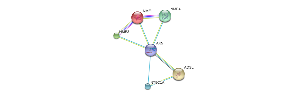 http://string-db.org/version_10/api/image/networkList?limit=0&targetmode=proteins&caller_identity=gene_cards&network_flavor=evidence&identifiers=9606.ENSP00000346577%0d%0a9606.ENSP00000013034%0d%0a9606.ENSP00000216194%0d%0a9606.ENSP00000219302%0d%0a9606.ENSP00000219479%0d%0a9606.ENSP00000235628%0d%0a