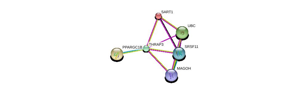 http://string-db.org/version_10/api/image/networkList?limit=0&targetmode=proteins&caller_identity=gene_cards&network_flavor=evidence&identifiers=9606.ENSP00000346634%0d%0a9606.ENSP00000360525%0d%0a9606.ENSP00000344818%0d%0a9606.ENSP00000310448%0d%0a9606.ENSP00000359988%0d%0a9606.ENSP00000312649%0d%0a