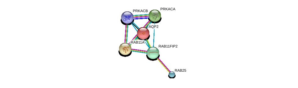 http://string-db.org/version_10/api/image/networkList?limit=0&targetmode=proteins&caller_identity=gene_cards&network_flavor=evidence&identifiers=9606.ENSP00000347839%0d%0a9606.ENSP00000261890%0d%0a9606.ENSP00000354376%0d%0a9606.ENSP00000199280%0d%0a9606.ENSP00000309591%0d%0a9606.ENSP00000359719%0d%0a