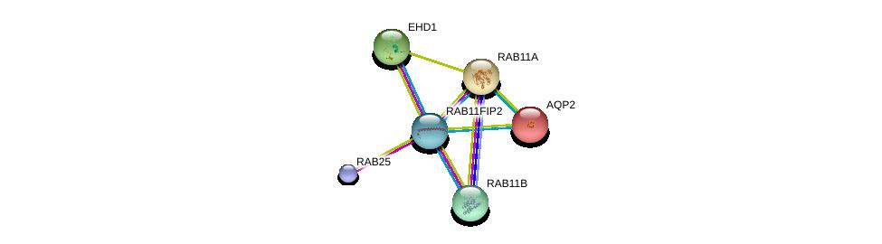 http://string-db.org/version_10/api/image/networkList?limit=0&targetmode=proteins&caller_identity=gene_cards&network_flavor=evidence&identifiers=9606.ENSP00000347839%0d%0a9606.ENSP00000320516%0d%0a9606.ENSP00000261890%0d%0a9606.ENSP00000199280%0d%0a9606.ENSP00000333547%0d%0a9606.ENSP00000354376%0d%0a