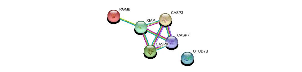 http://string-db.org/version_10/api/image/networkList?limit=0&targetmode=proteins&caller_identity=gene_cards&network_flavor=evidence&identifiers=9606.ENSP00000347858%0d%0a9606.ENSP00000311032%0d%0a9606.ENSP00000358327%0d%0a9606.ENSP00000330237%0d%0a9606.ENSP00000358131%0d%0a9606.ENSP00000308219%0d%0a