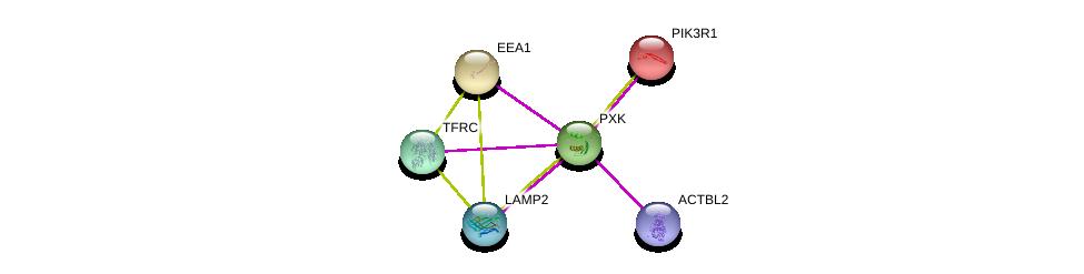 http://string-db.org/version_10/api/image/networkList?limit=0&targetmode=proteins&caller_identity=gene_cards&network_flavor=evidence&identifiers=9606.ENSP00000348472%0d%0a9606.ENSP00000408411%0d%0a9606.ENSP00000416706%0d%0a9606.ENSP00000274335%0d%0a9606.ENSP00000353224%0d%0a9606.ENSP00000317955%0d%0a