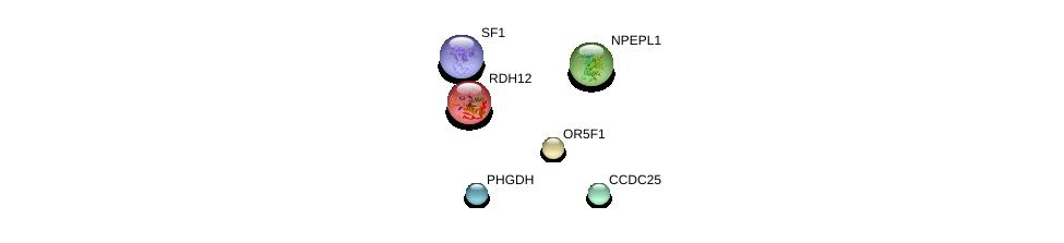 http://string-db.org/version_10/api/image/networkList?limit=0&targetmode=proteins&caller_identity=gene_cards&network_flavor=evidence&identifiers=9606.ENSP00000348933%0d%0a9606.ENSP00000348395%0d%0a9606.ENSP00000366604%0d%0a9606.ENSP00000358417%0d%0a9606.ENSP00000278409%0d%0a9606.ENSP00000267502%0d%0a